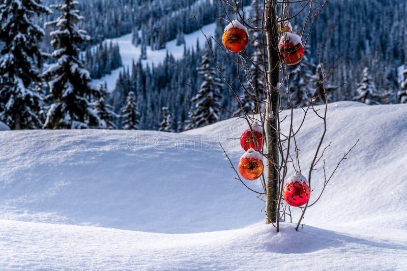 Het rode Kerstmisdecoratie hangen op boomtakken van een boom in een diep sneeuwpak stock fotografie