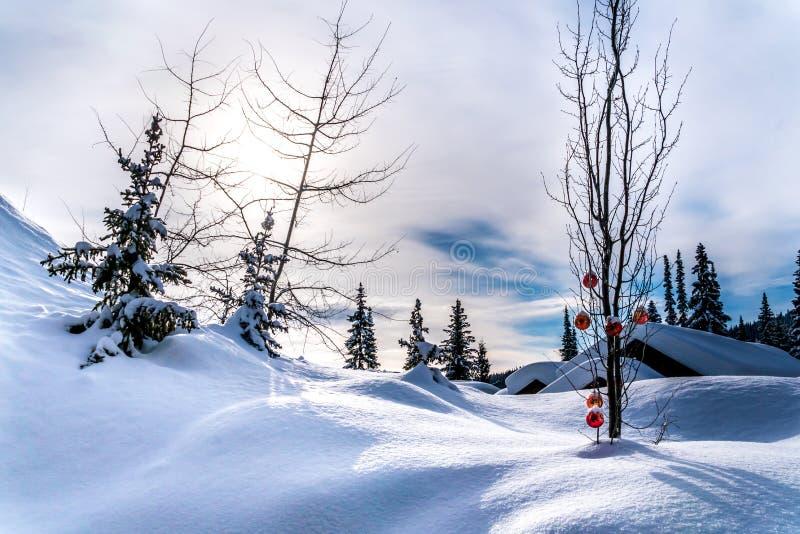 Het rode Kerstmisdecoratie hangen op boomtakken van een boom in een diep sneeuwpak stock afbeelding