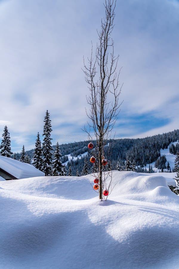 Het rode Kerstmisdecoratie hangen op boomtakken van een boom in een diep sneeuwpak royalty-vrije stock foto