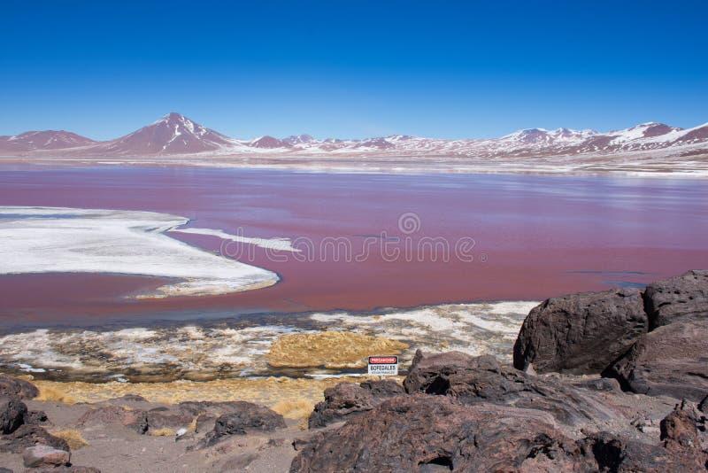 Het rode landschap Bolvia van de lagunetoerist royalty-vrije stock afbeeldingen