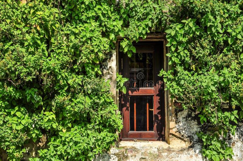 Het rode vensters en klimplanten groeien royalty-vrije stock afbeeldingen