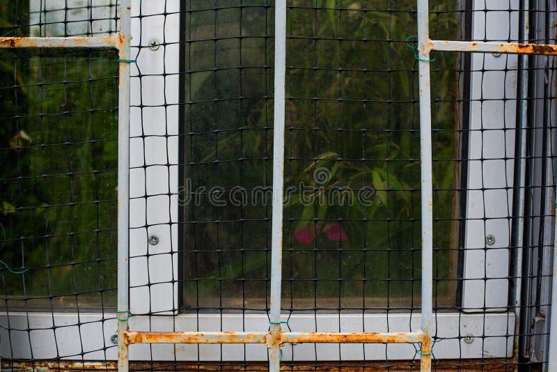 Het roestige venster van de serre stock fotografie