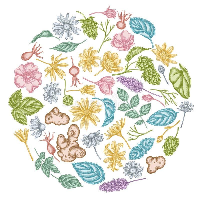 Het ronde bloemenontwerp met pastelkleurcelandine, kamille, hond nam, hop, de artisjok van Jeruzalem, pepermunt toe stock illustratie