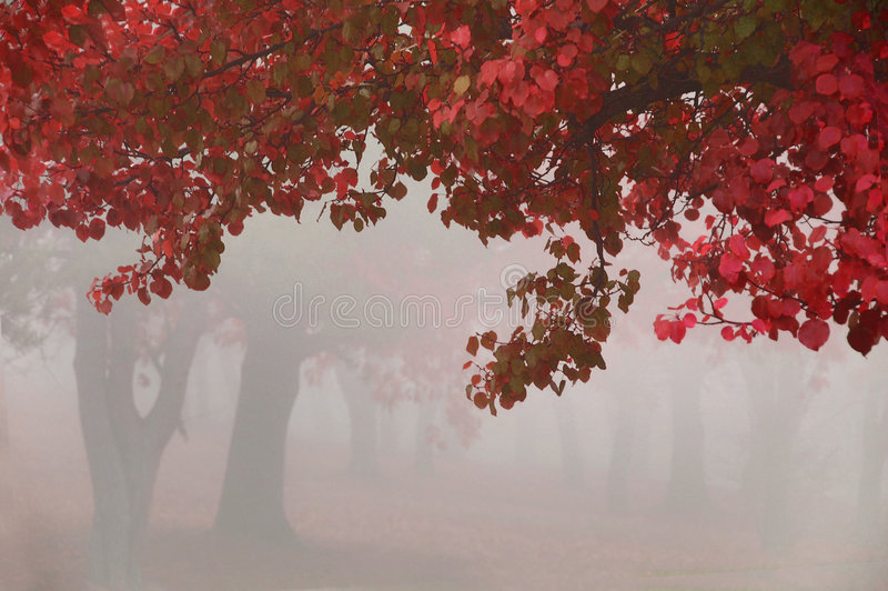 Het Rood van de herfst stock afbeelding