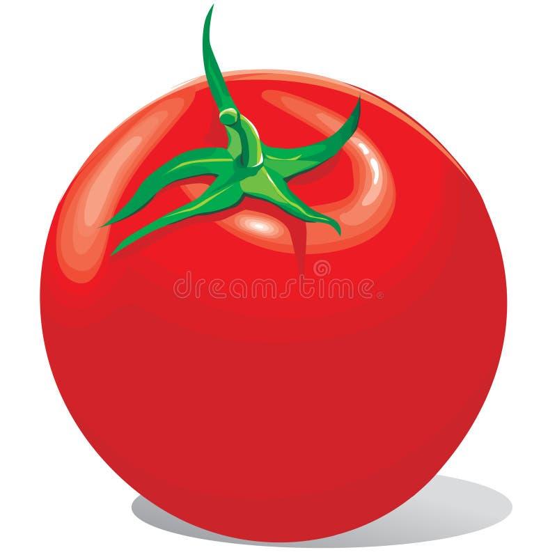 Het Rood Van De Tomaat Met Een Groene Staart Stock Afbeeldingen