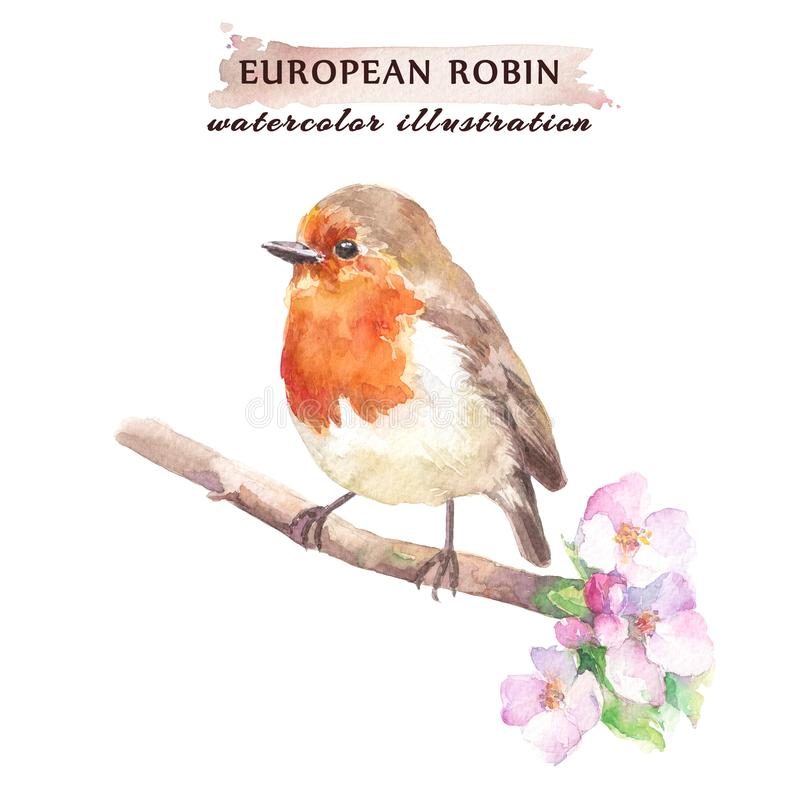 Het roodborstjevogel van Robin op de tak van de kersenbloesem vector illustratie