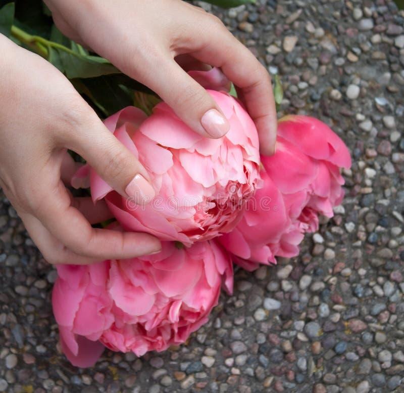 Het roze bloeide pioen in handen royalty-vrije stock foto's