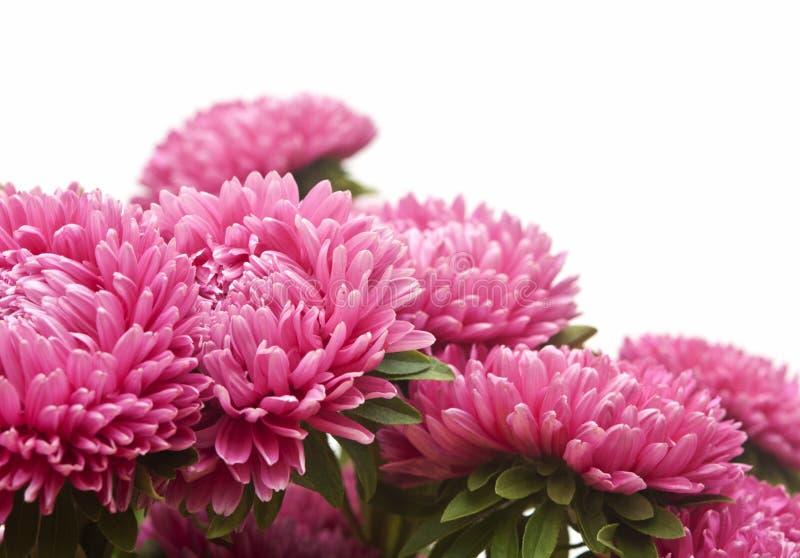Het roze boeket van astersbloemen royalty-vrije stock afbeeldingen
