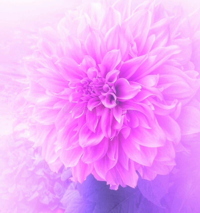 Het roze leven stock fotografie
