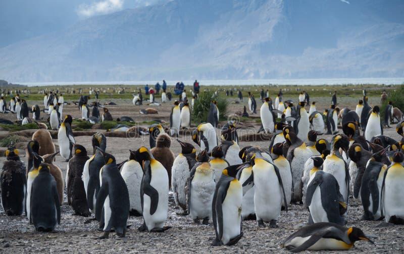 Het ruien Pinguïnen met Onlooking-Toeristen royalty-vrije stock afbeelding