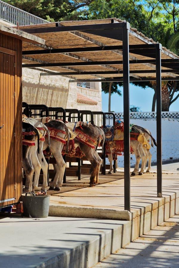 Het rusten ezels aan kar het rusten worden uitgerust die royalty-vrije stock fotografie
