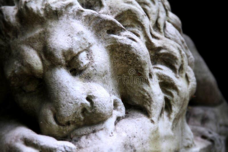 Het rusten leeuw stock foto's