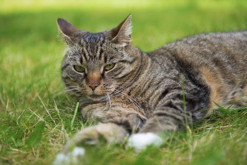 Het rusten van de kat stock foto