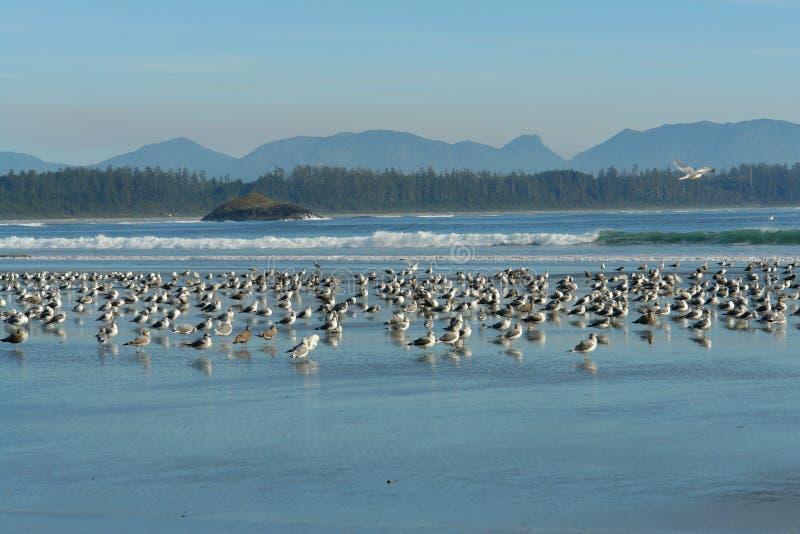 het rusten vogels royalty-vrije stock foto