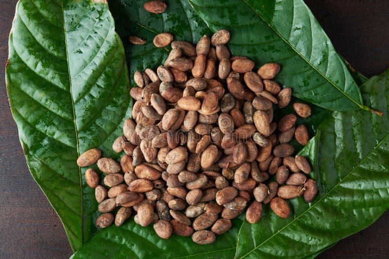 Het ruwe thema van cacaobonen royalty-vrije stock afbeeldingen