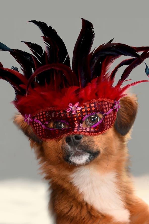 Het ` s Carnaval, weinig puppyhond met Venetiaans masker stock fotografie