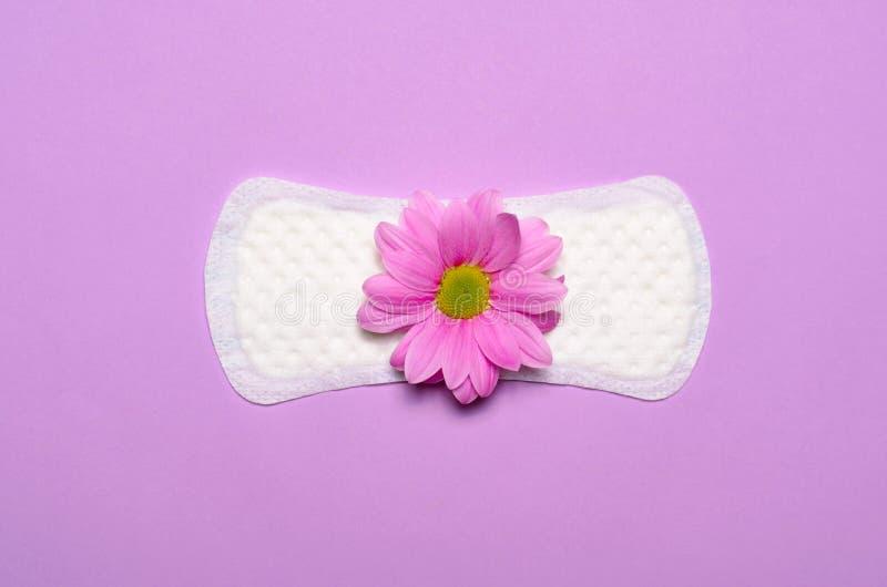 Het Sanitaire Stootkussen en Gerbera Daisy Flower, Vrouwelijk Hygiëneconcept van de vrouw stock fotografie