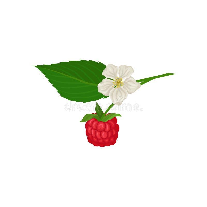 Het sappige framboos hangen op twijg met groen blad en kleine bloem Rijpe de zomerbes Zonnebloemzaden - zaadfonds Vlak vectorpict stock illustratie