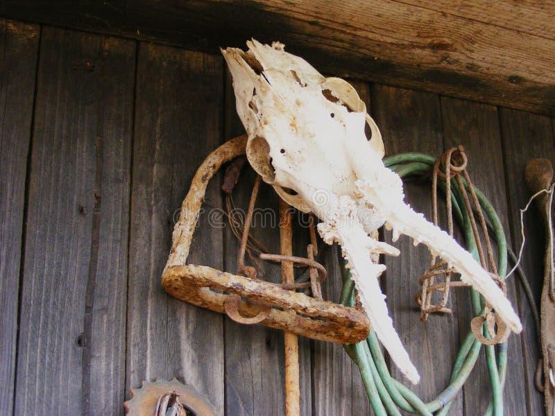 Het schedelvee, blijft, skelet royalty-vrije stock afbeelding