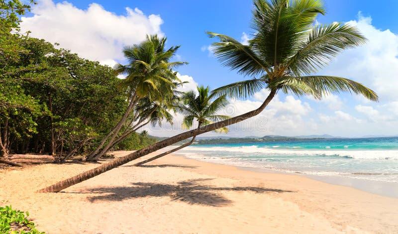 Het schilderachtige Caraïbische strand, het eiland van Martinique, Franse Antillen stock fotografie