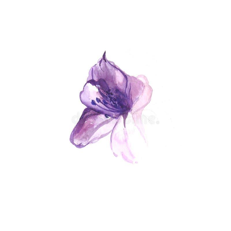 Het Schilderen van de waterverf purpere bloemlelie royalty-vrije illustratie