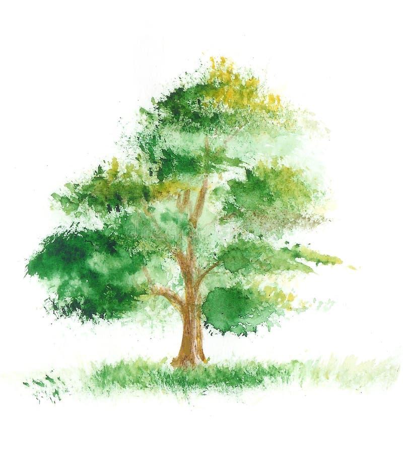 Het schilderen van de waterverf van een boom royalty-vrije illustratie