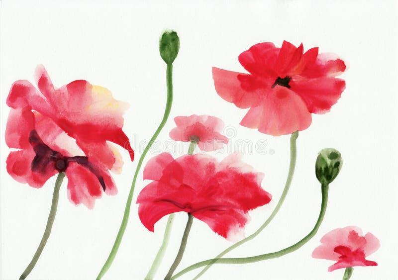 Het schilderen van de waterverf van rode papavers vector illustratie