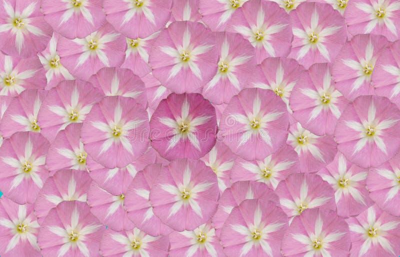 Het schilderen van een bloem royalty-vrije stock afbeeldingen