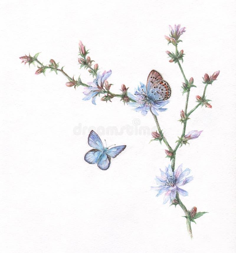 Het schilderen van het witlof en van de vlinderswaterverf royalty-vrije illustratie