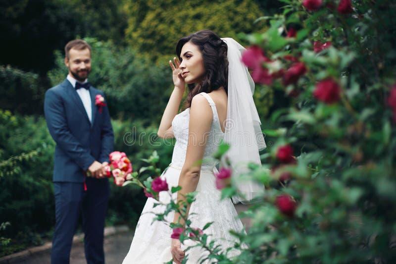 Het schitterende sexy donkerbruine bruid stellen dichtbij roze struik met binnen bruidegom royalty-vrije stock foto's