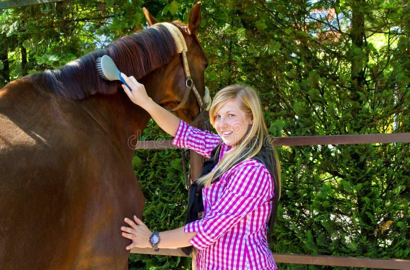 Het schoonmaken paard stock fotografie