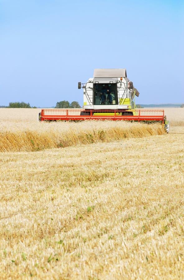 Het schoonmaken van een wheaten gebied door combineert royalty-vrije stock afbeeldingen