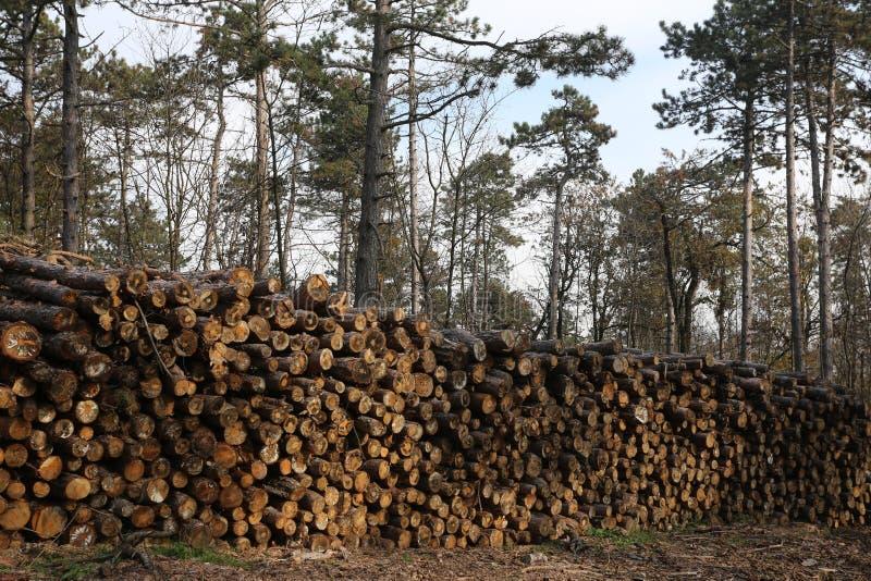 Het schot van vers gesneden brandhout opent een stapel het programma stock foto