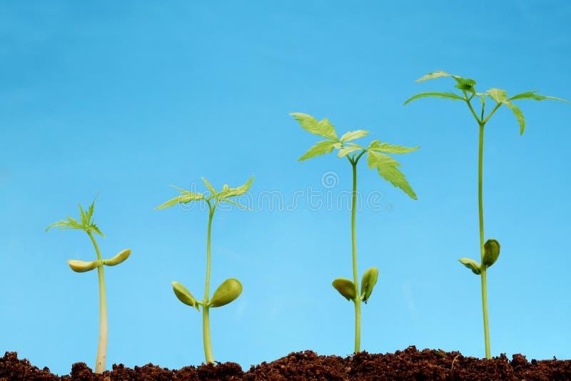 Het seedlingss-nieuwe leven vier stock afbeeldingen
