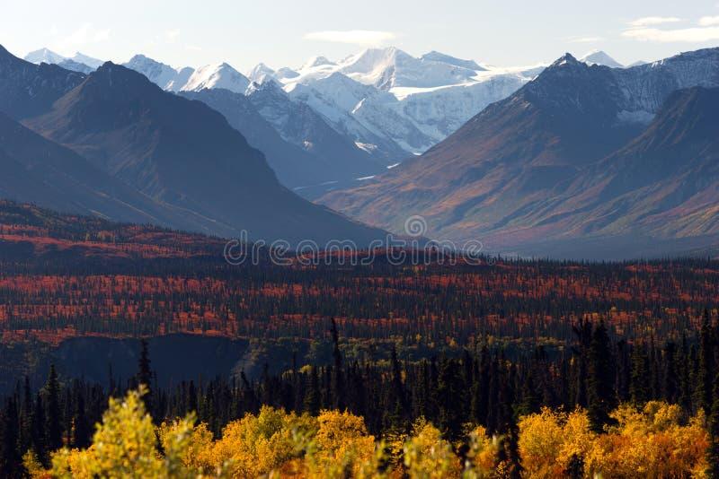Het Seizoen van Autumn Color Alaska Wilderness Winter van de Denaliwaaier royalty-vrije stock afbeeldingen