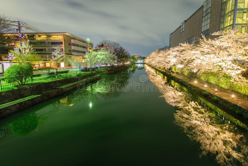 Het seizoen van de de kersenbloesem van Japan ` s royalty-vrije stock foto's
