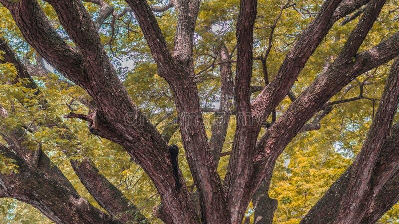 Het seizoen van de herfst Weg in dalingsbos royalty-vrije stock afbeelding