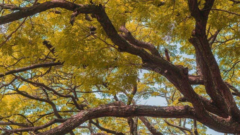 Het seizoen van de herfst Weg in dalingsbos royalty-vrije stock foto's
