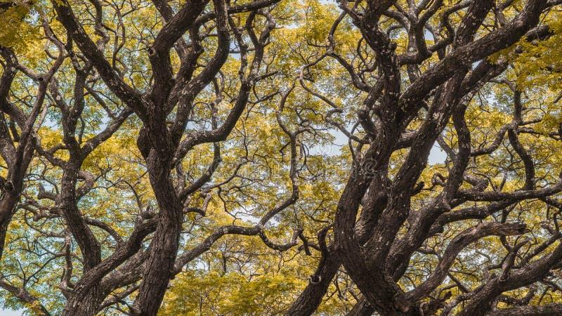 Het seizoen van de herfst Weg in dalingsbos stock fotografie