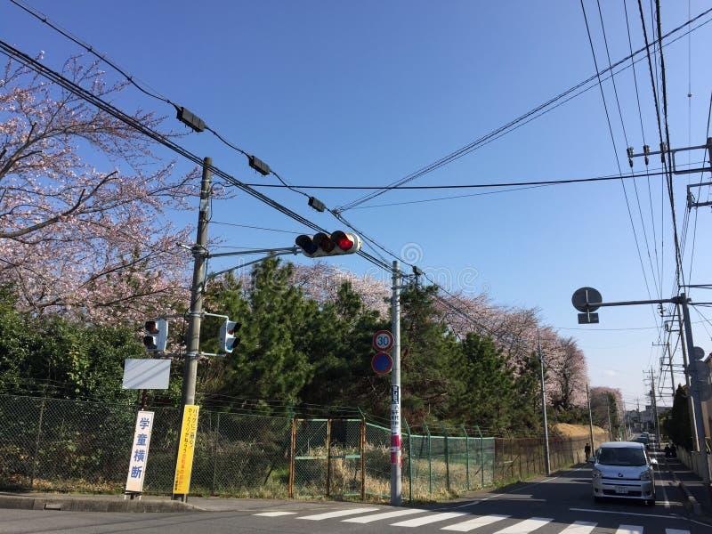 Het seizoen van de kersenbloesem in Japan royalty-vrije stock foto