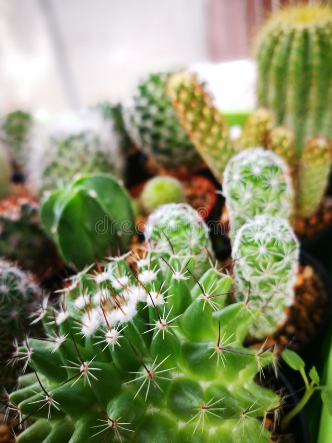 Het selectieve concentreren zich op Cactus met vele soorten Cactusachtergrond royalty-vrije stock afbeelding