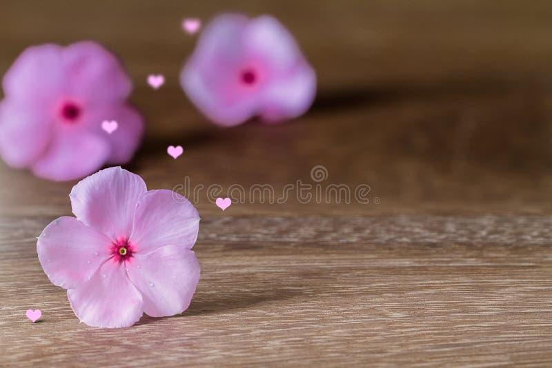 Het selectieve nadrukroze bloeit het bloeien met roze hart met zachte schaduw op grunge uitstekende houten lijst stock foto