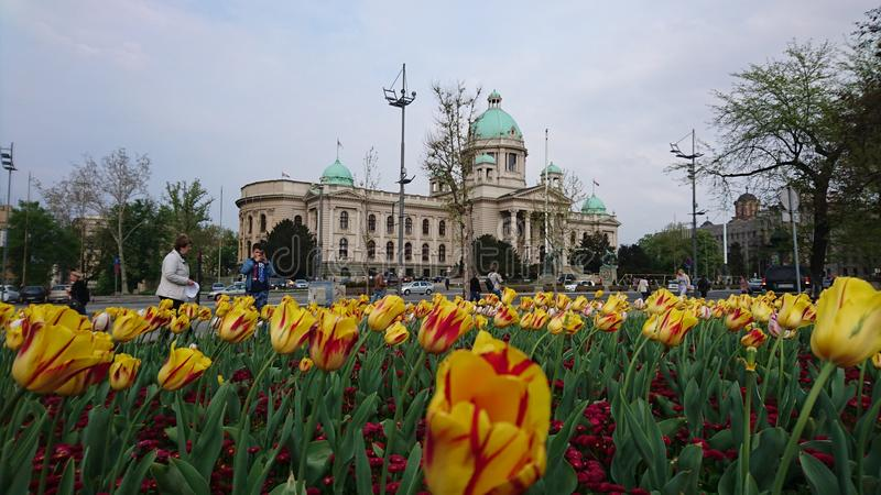 Het Servische parlement stock afbeelding