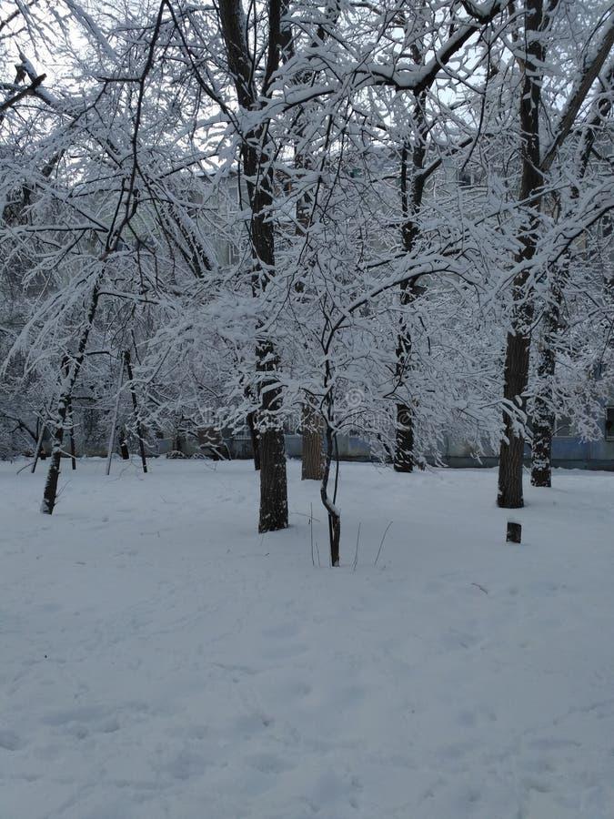 Het silhouet van bomen befringed met sneeuw stock foto