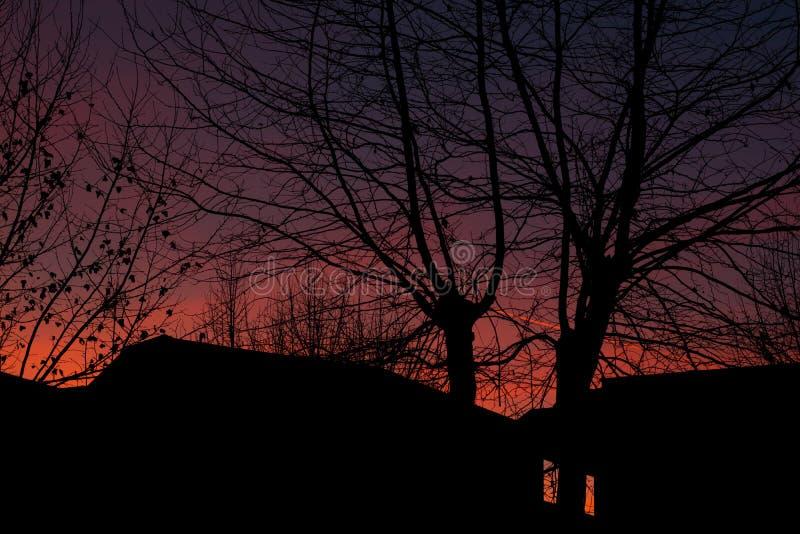 Het silhouet van bomen bij zonsondergang in de stad stock afbeelding