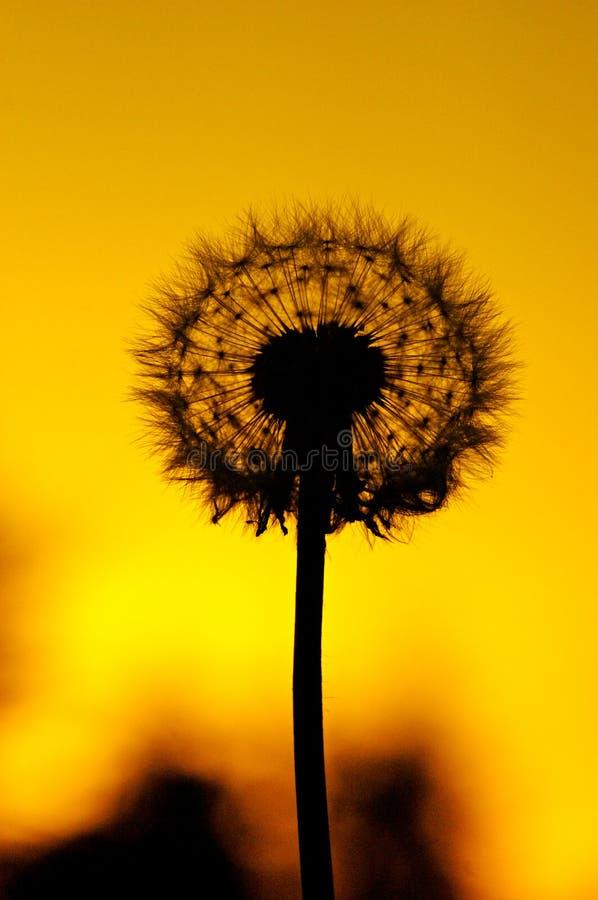 Het Silhouet van de bloem royalty-vrije stock foto's