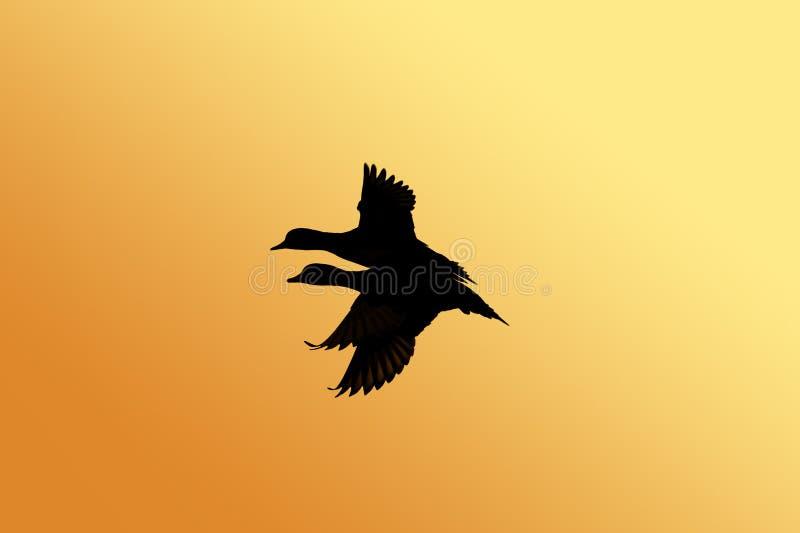 Het silhouet van de eend stock illustratie