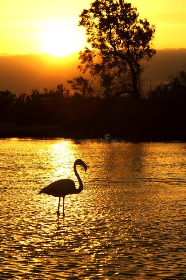 Het Silhouet van de flamingo stock afbeeldingen