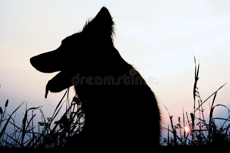 Het silhouet van de hond stock fotografie