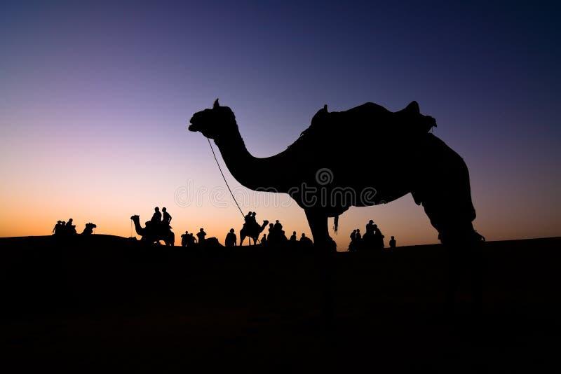 Het silhouet van de kameel royalty-vrije stock afbeelding